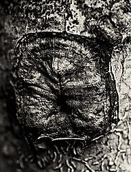 everglades12012m300mm_3606_.jpg