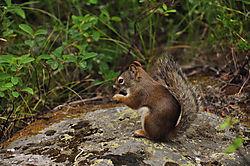 crop_of_ground_squirrel.jpg