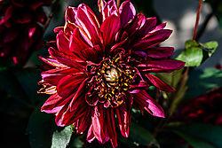 Blumen-4094_DxO.jpg