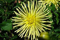 Blumen-812_DxO.jpg