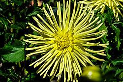 Blumen-812_DxO1.jpg