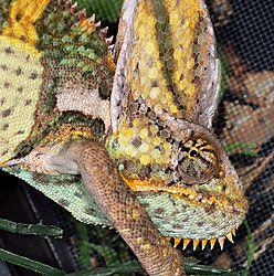 Reptiles-20120727_18.JPG