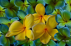 yellow-flowers-sign1117.jpg