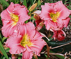 flowers-crop.jpg