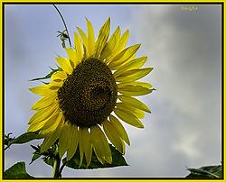 2012-09-06-039-DX-lf-FB.jpg