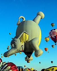 Dumbo_-_Nikonians.jpg