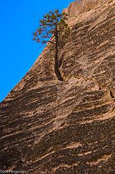 Tree_Growing_In_A_Rock_-_Nikonians.jpg