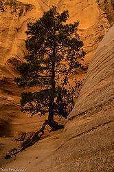 Tree_In_Rock_-_Nikonians.jpg