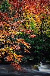 november_landscape_cchoc.jpg