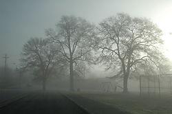 041208_Trees_in_Fog-02.JPG