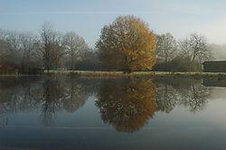 041208_Trees_in_Fog-18.JPG