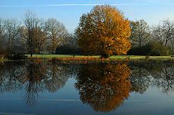 041208_Trees_in_Fog-31p.jpg
