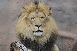 Sacramento_Zoo_023_800x530_.jpg