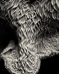 Mushroom_No_15_2012_D7000_60AFS_Printed_11x14.jpg
