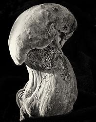 Mushroom_No_33_2012_D7000_70-180_70_6T_f16_0_4_sec_ISO_200_Printed_11x14.jpg