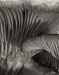 Mushroom_No_5_2012_0862_D7000_105AIS_Printed_11x14.jpg