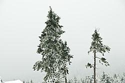 DS3_1856.jpg