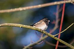 backyard_birds.jpg