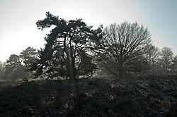 2bomen.jpg