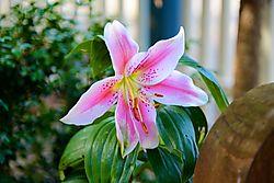 Spring_Garden_2.jpg