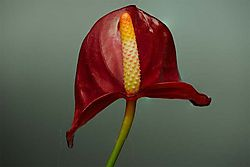 7_layer_image_of_red_flower.jpg