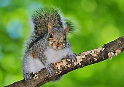 Baby_squirrel.jpg