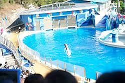 dolphin_burst_088.jpg
