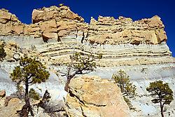 Canyon_Wall_and_Trees_-_small.jpg
