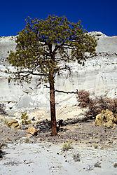 Tree_on_Canyon_Floor_-_small.jpg