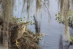 Bird39.jpg