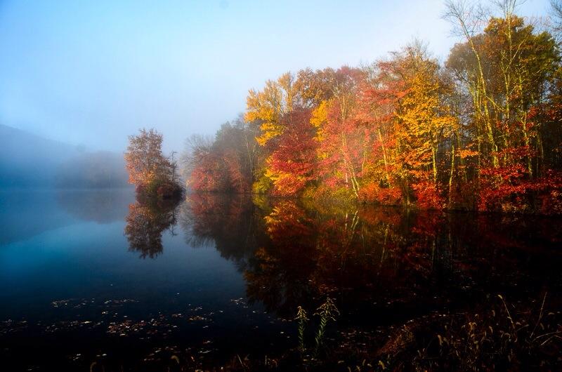 Fog_and_Fall