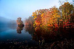 Fog_and_Fall.JPG