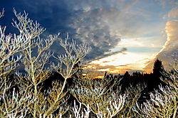 3-25sunsetbranches2.jpg