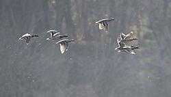 DSC9665_-_Ducks_in_Sun_Cropped.jpg