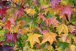 DSC_0236_leaves.jpg