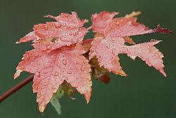 GML_0179_autumn.jpg