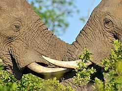 Elephant_Siblings.jpg
