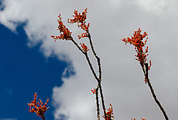 Salvia_Mallow-4853-2.jpg