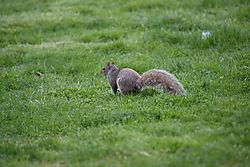 Squirrel_unprocessed.jpg