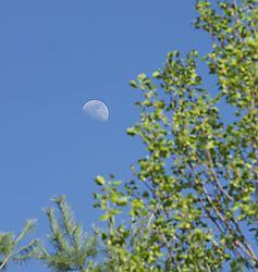 Moon-15.jpg