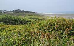 CAMBRIA_CA_MORNING-2.jpg