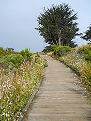 CAMBRIA_CA_MORNING-3.jpg