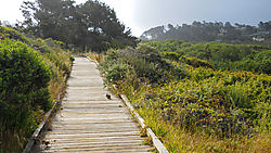CAMBRIA_CA_MORNING-4.jpg