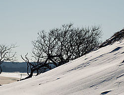 DSC_6009_Trees_on_a_Beach_3.jpg