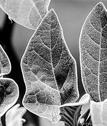 Leaves-7578.jpg