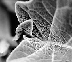 Leaves-7587.jpg