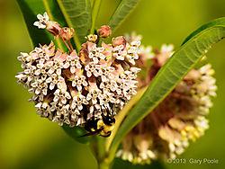 Nature_20130715_099.JPG