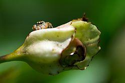 insectos-10.jpg