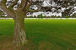 Tree32.jpg