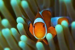 1q_underwater_sbysshe.jpg